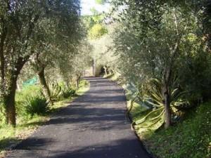 The private road